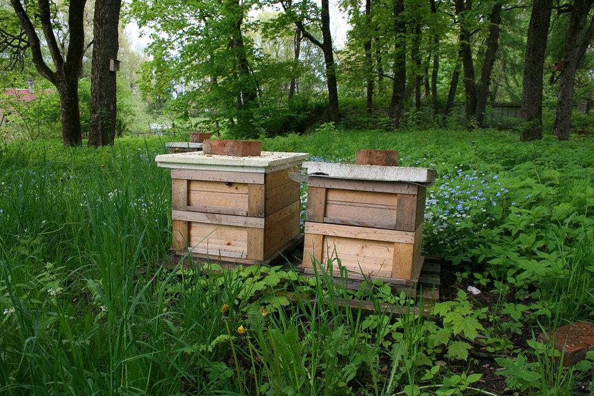 In wunderbarer Natur, fernab von der stressigen Zivilisation wird dieser Honig produziert. Man schmeckt es nicht nur, wir sind auch begeistert von der schönen Verpackung: So sind Liebreiz-Produkte - fair, gesund und schön!